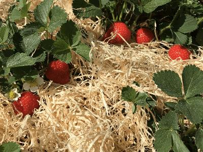 Gartenholzwolle