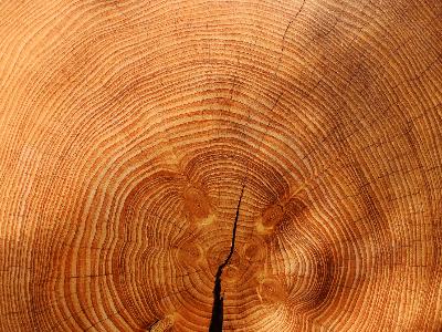 Fichtenholzwolle